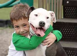 Boy With Pit Bull Pup